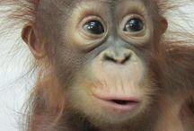 Helen / orang / About a cute little monkey