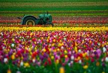 Garden / by Lori Jones