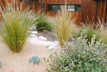 Balgowlah garden / Residential garden