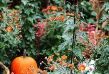 Halloween / by Morton Arboretum