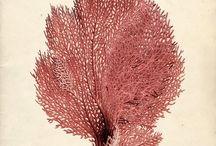 Botanical Illustration / Botanical Illustration Inspiration