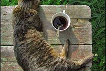 kávés maccsok
