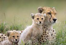 animals I love <3 / by Shadae Lawson