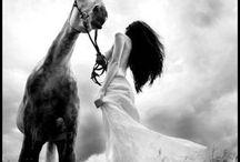 фотосет с лошадьми