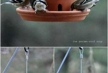 pour oiseaux