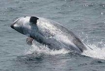 End Dolphin Captivity