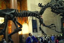 NYC,Museum of natural history