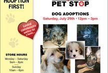 Dog Adoption / Save a life, Adopt a dog