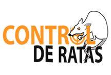 Noticias del Control de Ratas