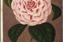 Illust flower
