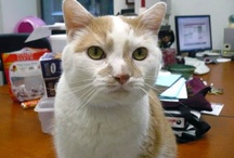 Guy, our Ambassador Cat