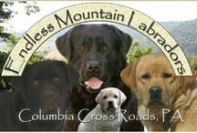 Endless Mountain Labradors / by Endless Mountain Labradors