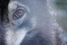 Working with sleddogs in Finland