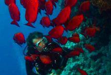October 24-31, 2013 Dive Safari Trip - MY Blue Seas / On board MY Blue Seas. October 24 to October 31, 2013. RedSea, Egypt. Visit www.blueplanet-liveaboards.com.