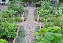 Raised vege beds