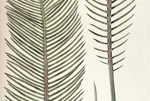 Botanical prints / The world is full of antique botanical prints. Love them!