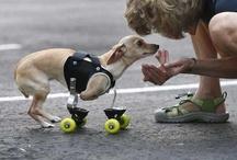 Handicappet Hunde