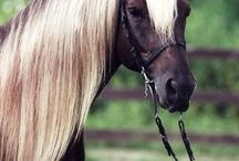 Gorgeous horse breeds