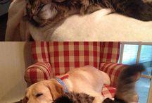 Doggie / kitty
