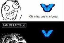 Nemes de miraculus  laydybug