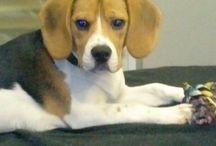buddy / Mon chien