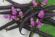 Amy's Garden / Plants/Seeds for Amy's Garden
