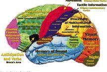 Psikologi / Brain