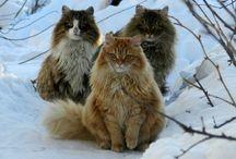 Animals!!