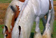 HorseTackStableEquestrianEquitanaWesternCowboyGypsyHorses.