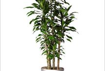 Office Plant Image Inspiration / Here are image that can be used as references for drawing plants.