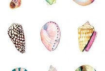 shells to draw
