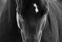 Horses/Caballos / Todos caballos!