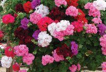 огород, цветы