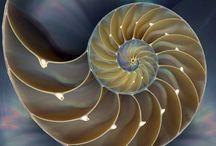Classic Fibonacci