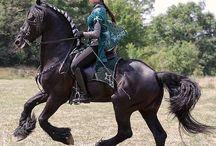 Horses Atlar
