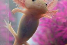 axelotl,geckos