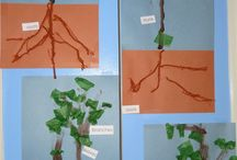 drzewa&rośliny