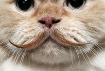 funny cat's