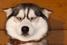 Woof ❤