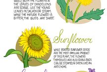 Gardens - Edible Flowers