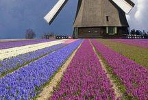 Holanda! / by Giuseppe Sterrantino