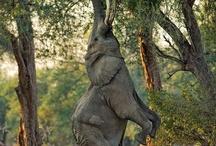 Elephants / Favourite Pictures