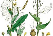 Plant Gathering Ideas