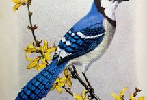 Blue Jay / Blue Jays remind me of my daughter.