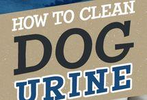 pet urine cleanup