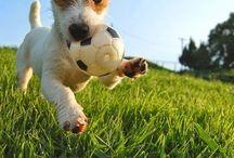 Hunde Photographie