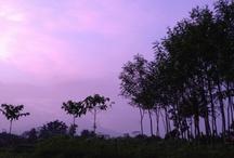 Home.. / Jl. KH Abdul Hamid, cibungbulang, bogor.