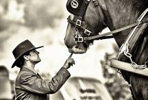 HOLD YER HORSES--1 / ALL TYPES OF HORSES / by J.M. JOHNS