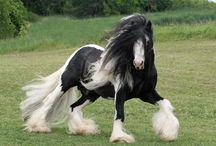 Horsey / by Carolyn Murray