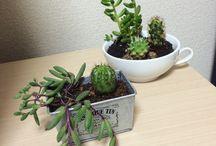 Succulent and cactus ❤️